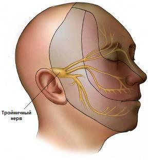 лицевой тройничный нерв фото