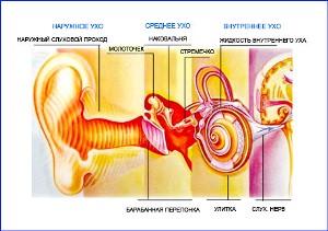 классификация кохлеарного неврита лечение  кохлеарного неврита