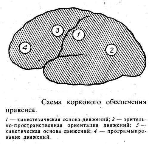Области поражения мозга