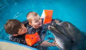 Воздействие дельфинотерапии